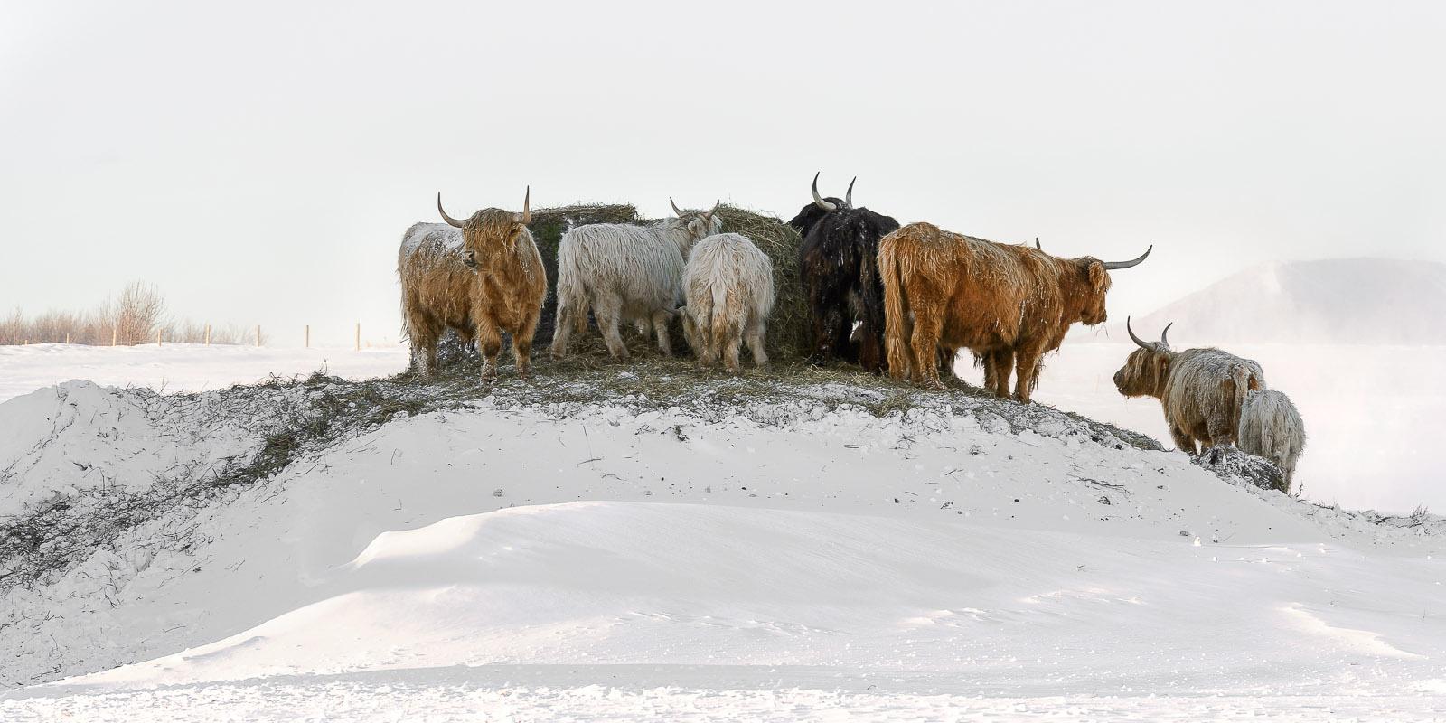 L'hiver à la campagne!