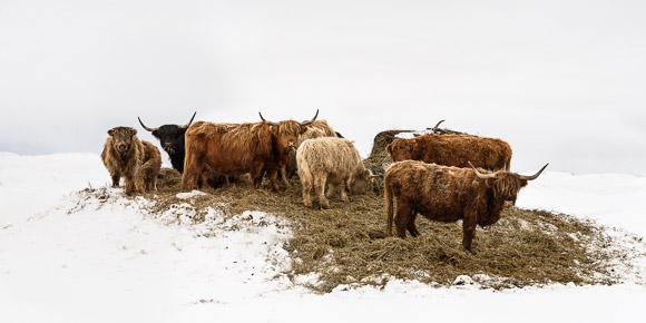 Highlands: Lieux isolés, inculte, légendaire s'il en est Highland: Nom évocateur de l'extrême rudesse à laquelle les bêtes sont soumises