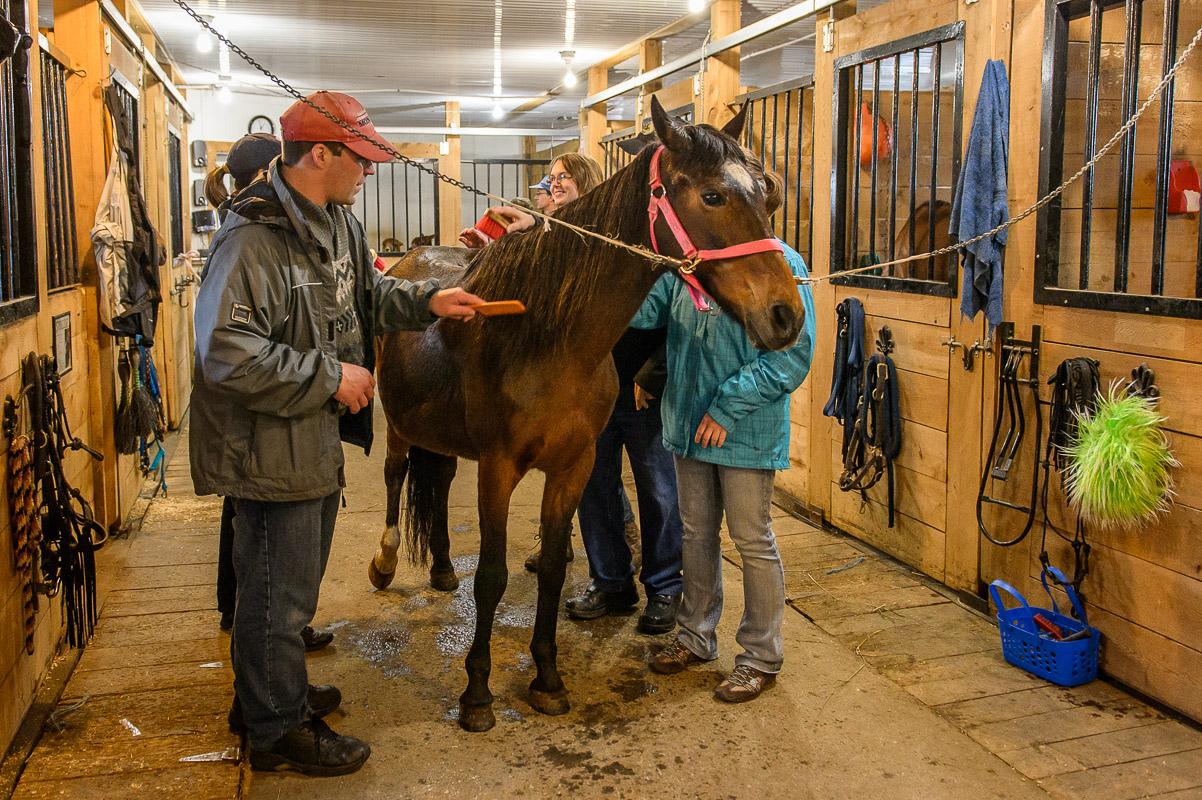 Brosser les animaux, une des activités intérieures appréciée des participants!