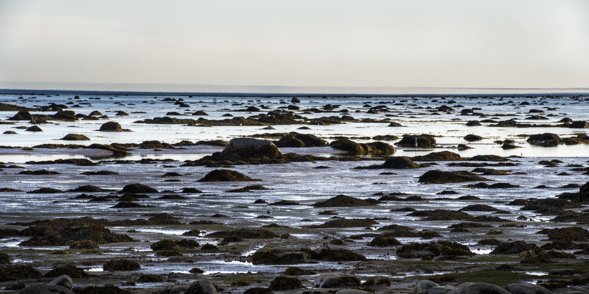 Section de la baie à marée basse