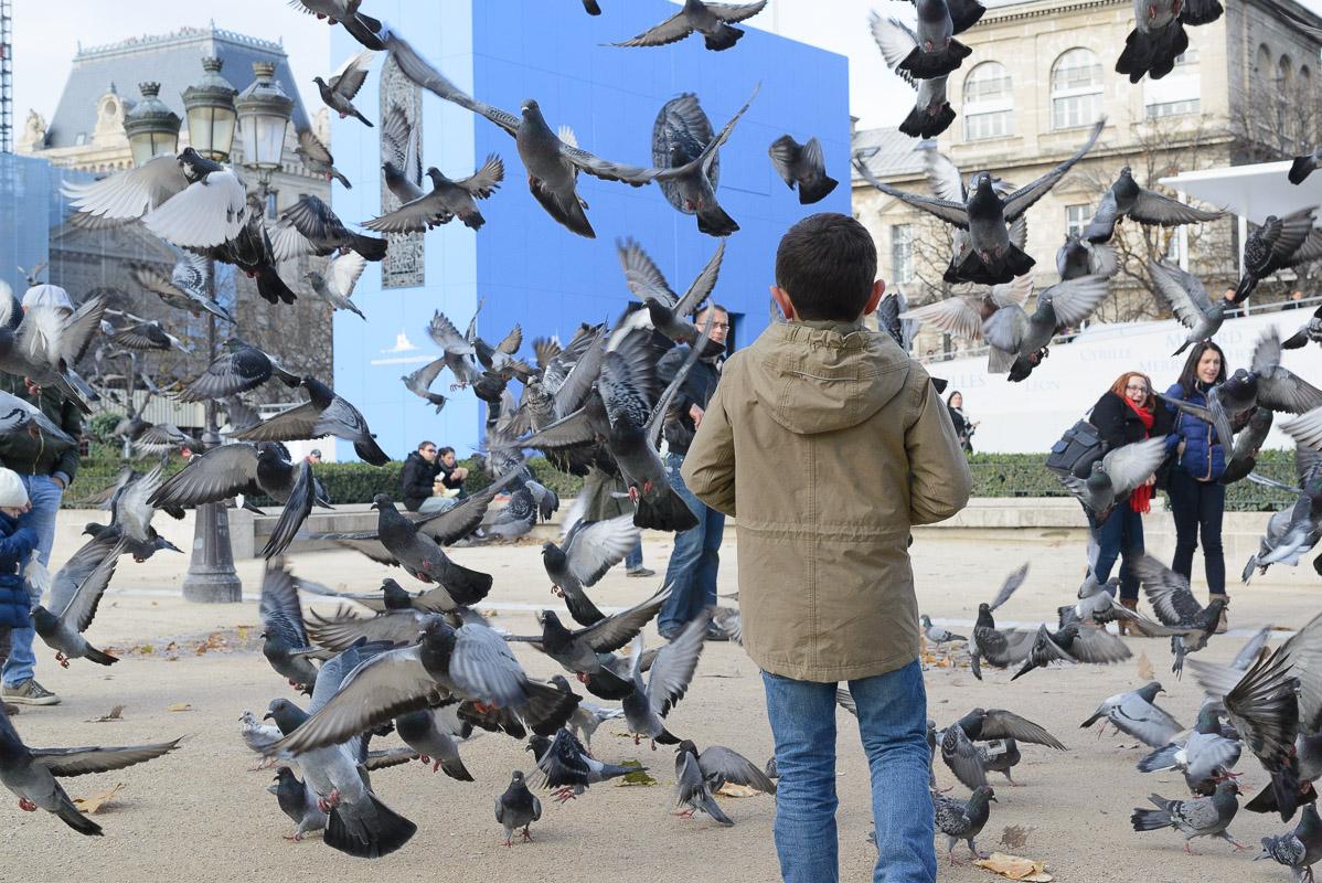Près de Notre-Dame de Paris, des dizaines de pigeons s'en donnaient à coeur joie pour récupérer de la nourriture.