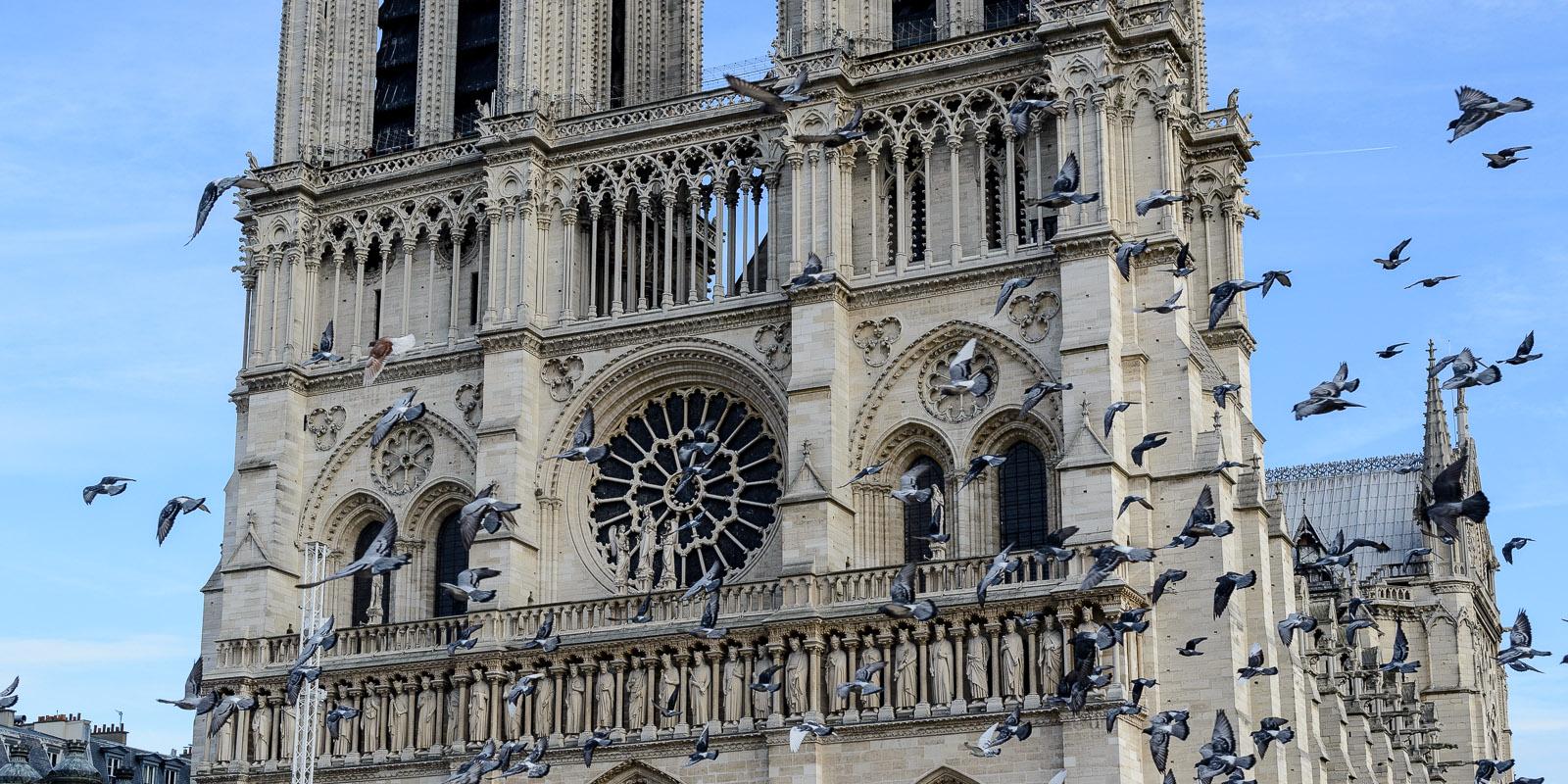Envolée de Pigeon devant la façade de Notre-Dame de Paris