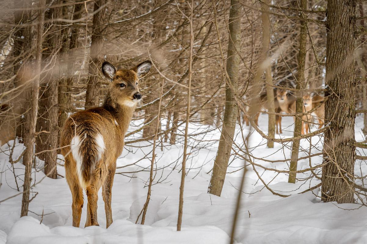 Rencontres hivernales