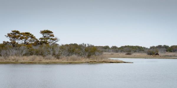 Paysage typique observé sur l'Île. On remarque un cheval en tout petit à droite.